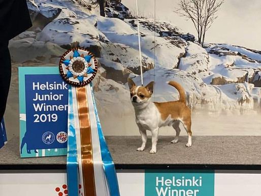 Meillä on Helsinki Juniori Winner ja Helsinki Veteraani Winner 2019!