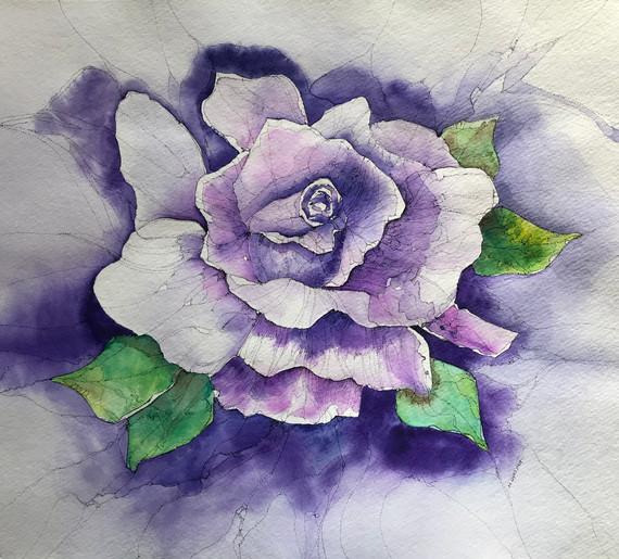 Rose in Bloom.jpg