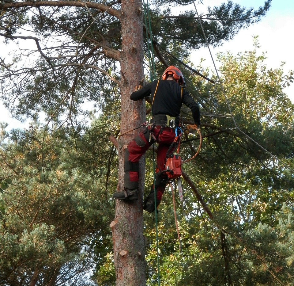 tree-surgeon-1766111_1280.jpg