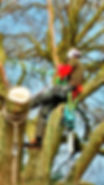 Tree surgeons in Holt