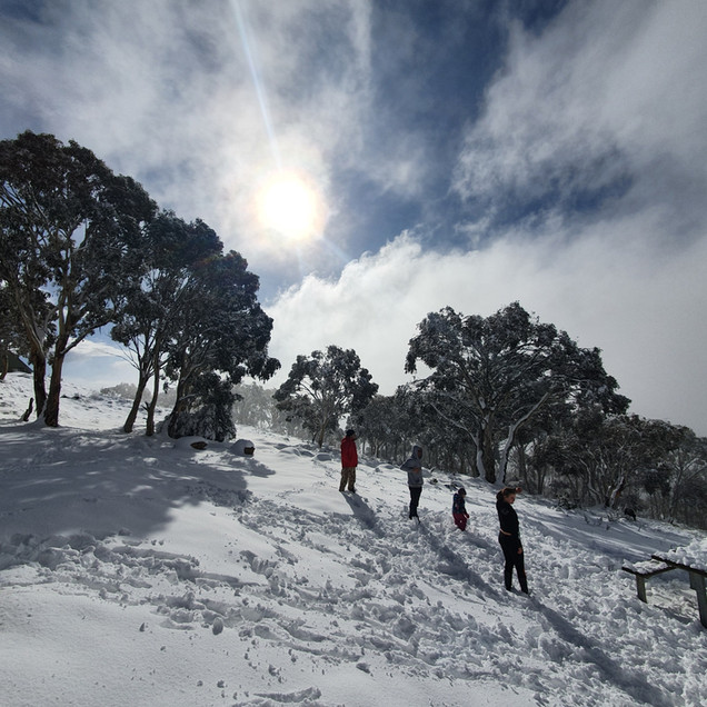 snowball fight on mount terrible 4wd adventure victoria