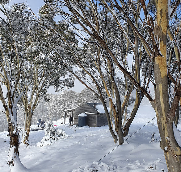 Mount Terrible Hut
