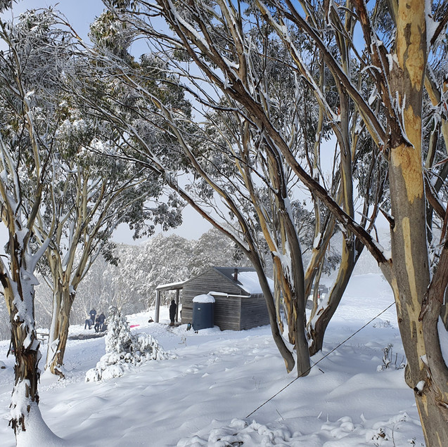mount terrible hut in snow with snowgums melbourne 4wd