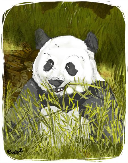 panda-evelyz
