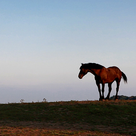 HorseOnTheRange.jpg