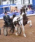 professional horse training