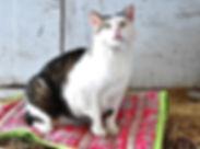 cat+-+edit.jpg