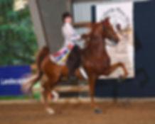 saddle seat equitation training