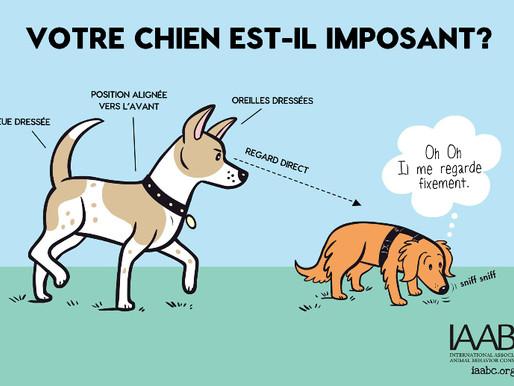 Langage canin: De quelle façon les chiens communiquent leurs émotions entre eux et avec les humains