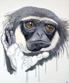 Javan Gibbon