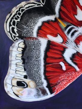 Moth Wing 1