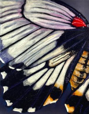 Butterfly Wing 3