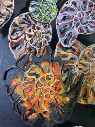 Contrasting Ammonites