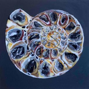 Ammonite Study
