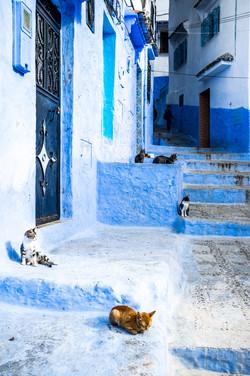 Moroccan Blue-5
