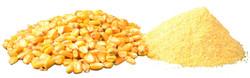 corn.white1.jpg