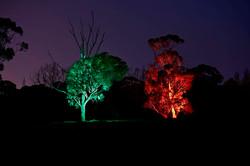 Brompton Lodge Trees