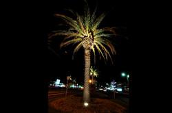 Mordialloc Shopping Precinct - Palm