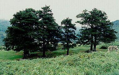 los-pinos-de-Garabandal.jpg