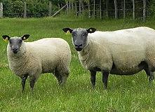 geneval Indexation onvins viande