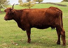 Geneval Indexation bovins viande