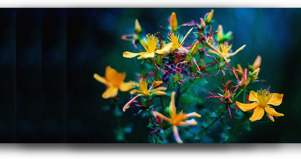 flower and herb.jpg
