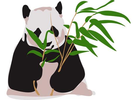 China's softest power: Pandas.