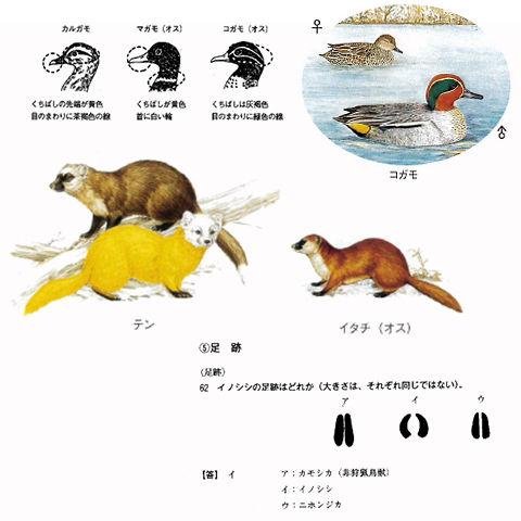狩猟情報_image.jpg