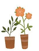 twee potten met plant en oranje bloemen.