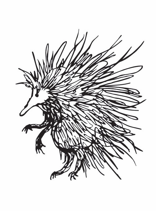 'spike' - australian echidna