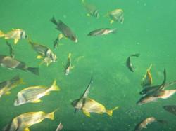 Eleuthera Ocean Hole Fish
