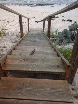 Stairs going down to the Ocean
