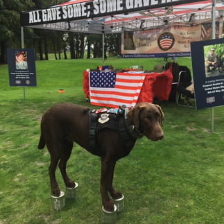 """""""Ranger"""" is doing his confidence training, for vets and sponsors at our booth at a T2H event."""