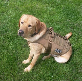 Each of our K9 companions proudly display names and unit patches that honor specific individuals that were killed in action for this country.