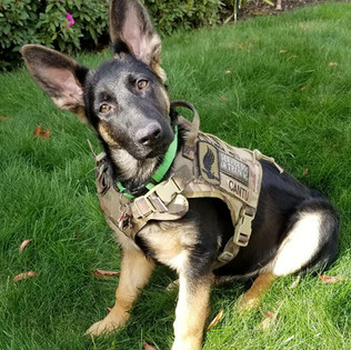 """""""Anna"""" is now in training with Ric Olson, a Vietnam veteran. They live in Lebanon, Or."""