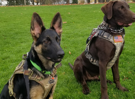 K9s SAVE (Serving American Veterans Everywhere) in the news!