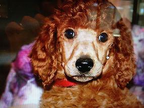 Remi puppy.jpg