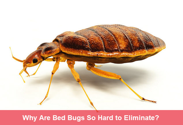 how to get rid of bed bugs | Sterifab