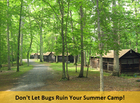 How to Keep Summer Camp Clean, Safe and Pest Free!