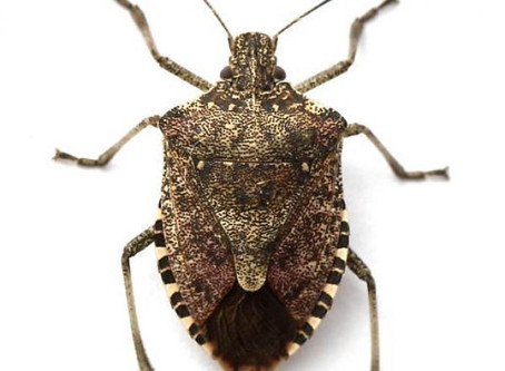 Winter Bugs: Does Your House Have Unwanted Guests?