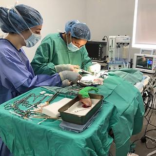 orthopedic surgeons at exotic vet in new york