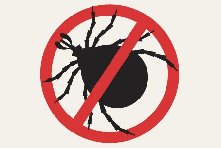 The Do's and Don'ts of Eradicating Bed Bugs