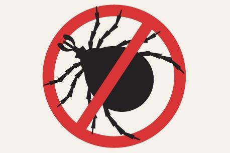 sterifab bed bug killer spray