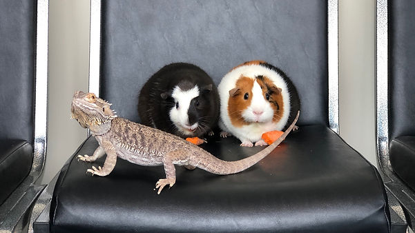 exotic animal vet