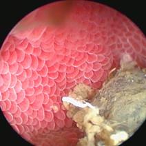 exotic vet endoscopic image new york