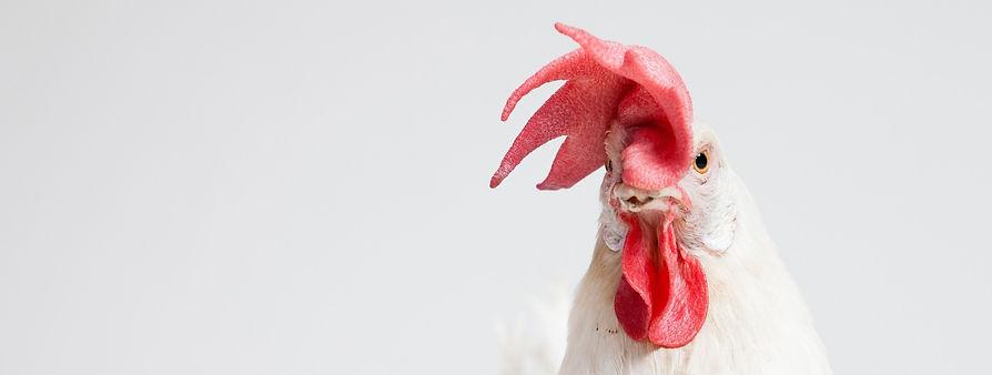chicken vet near me