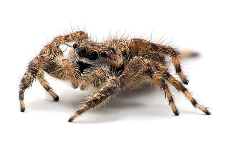 Your Guide to Spiders: The Good, the Bad and the Ugly