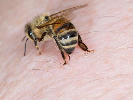 What Bit Me? Guide to Identifying Bug Bites