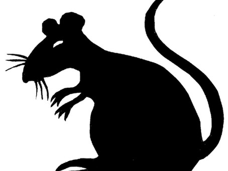 Get Rid of Rats and Rodents!