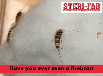 get rid of firebrats with sterifab
